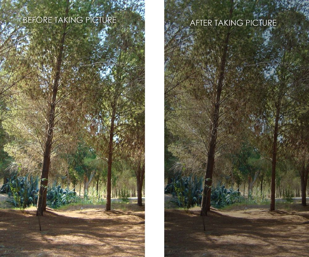 forest-cyprus.jpg