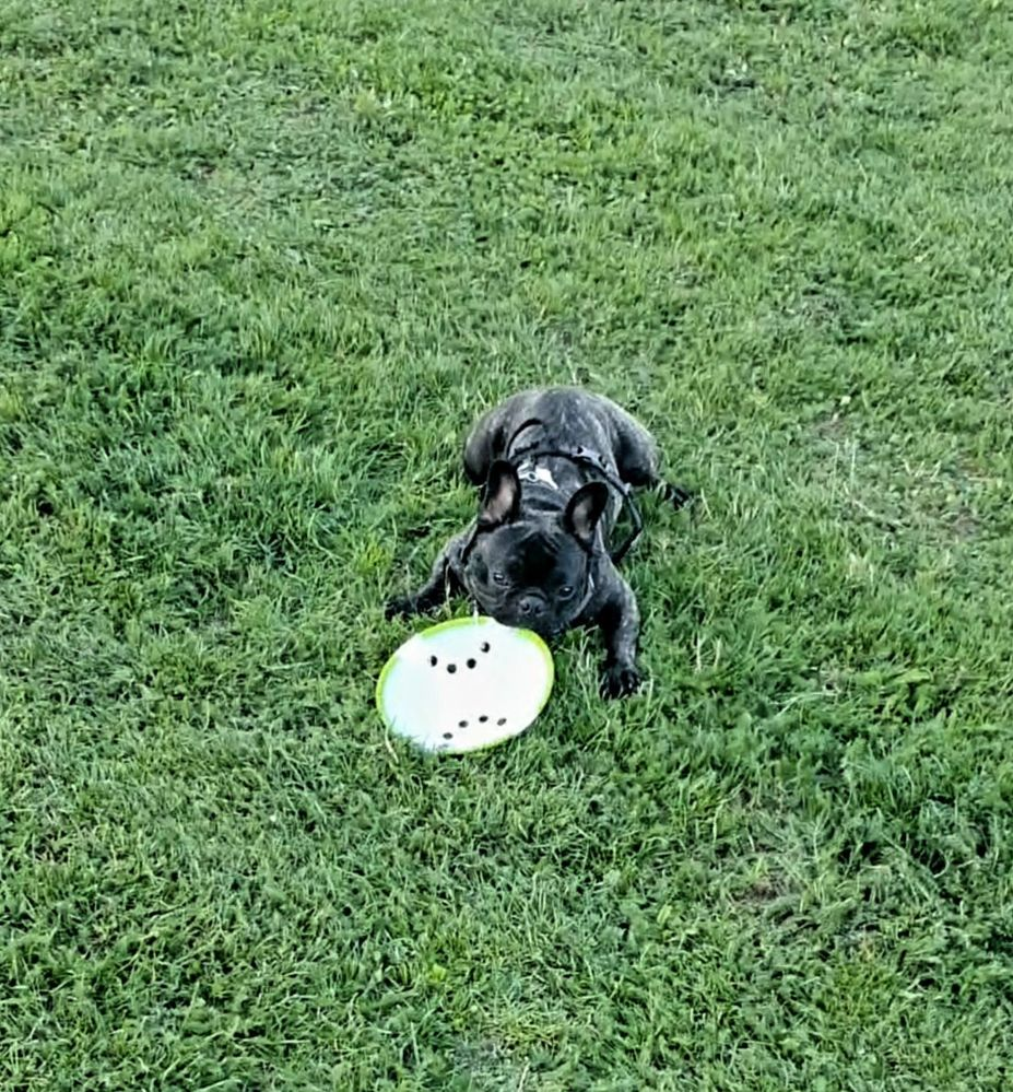 He doesn't like balls, so next best thing?