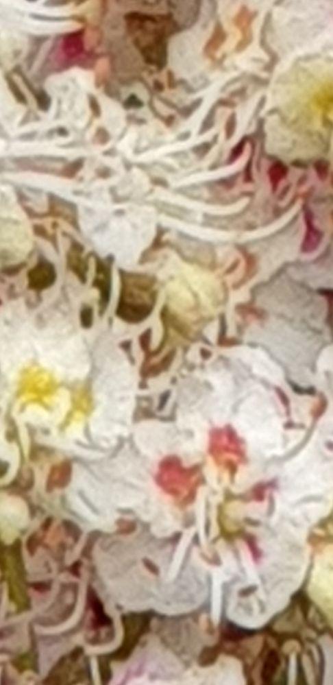Screenshot_20190512-174654_Gallery.jpg