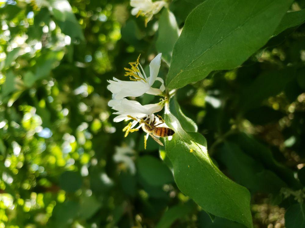 včela.jpg